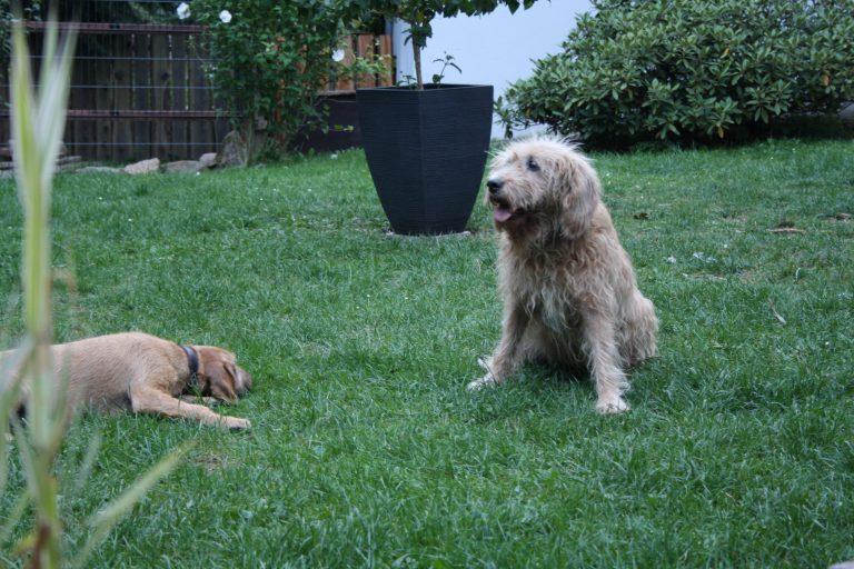 Fritzi und Cira